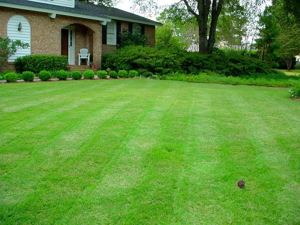 """The Perfect Lawn"" (Courtesy of Sir Mildred Pierce)"