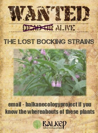 The lost bocking strains