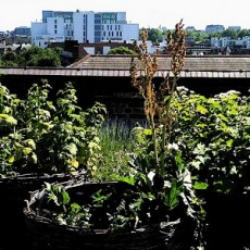 feat Rooftop Allotment (Courtesy of David Barrie)