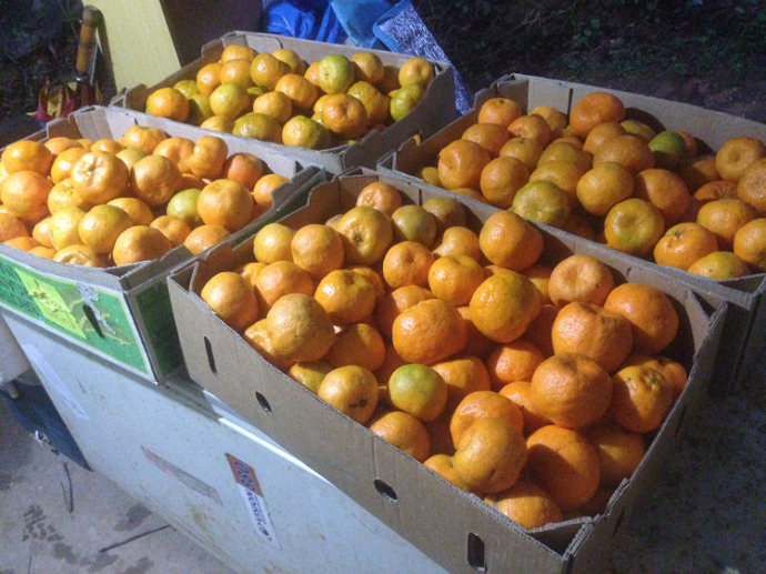 Mandarines boxed and ready to go the the local organic co-op.
