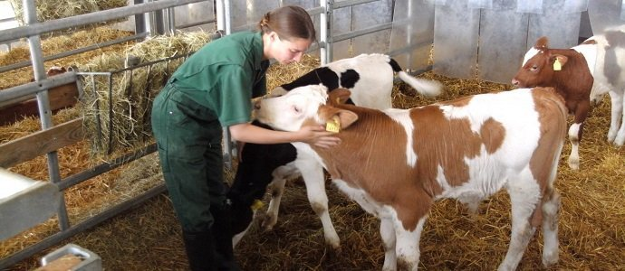 Photo of Stroking Your Way To Higher Milk Yield