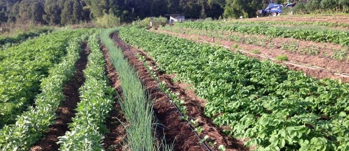 Photo of Crop Rotation – A Vital Component of Organic Farming