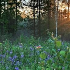 sun-in-trees-