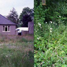 Graham-Bell-Forest-garden