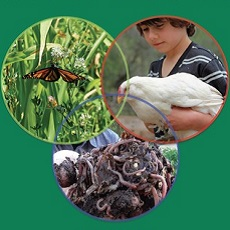 Permaculture for School Gardens (Ebook)