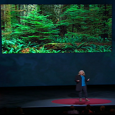 Suzanne Simard: How Trees Talk to Each Other