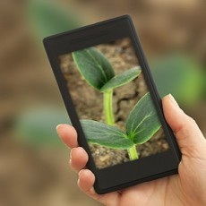 Using mobile phone to take photos of green seedling in soil