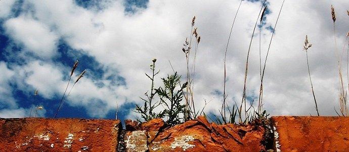 Weeds (Hermann Kaser)
