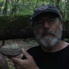 Fomes Fomentarius in the French Alps and Paul Stamets