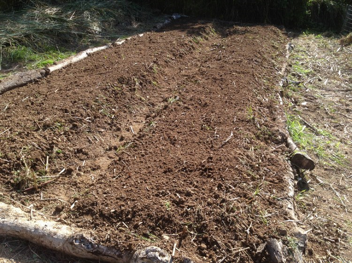 The six barrow loads of compost spread ready to be forked in.