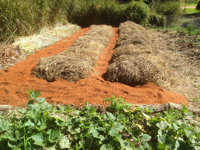 Adding Sawdust to the garden paths helps to minimise weed growth and also retains moisture.