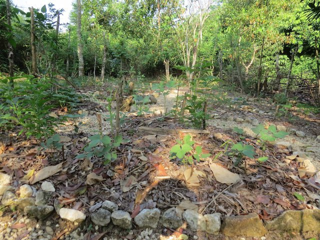 Gardens and Swales in Belize (Emma Gallagher)
