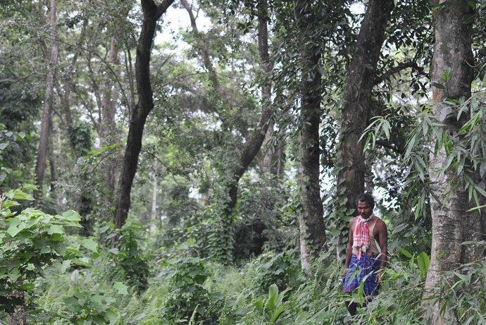 The forest of Molai Santuary. Photo credit: Photo by Jitu Kalita.