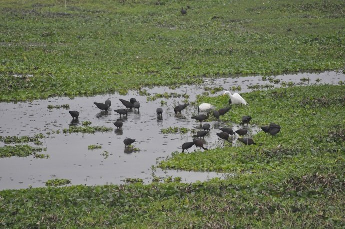 The resident birds around a water body. Photo credit: Photo by Jitu Kalita.