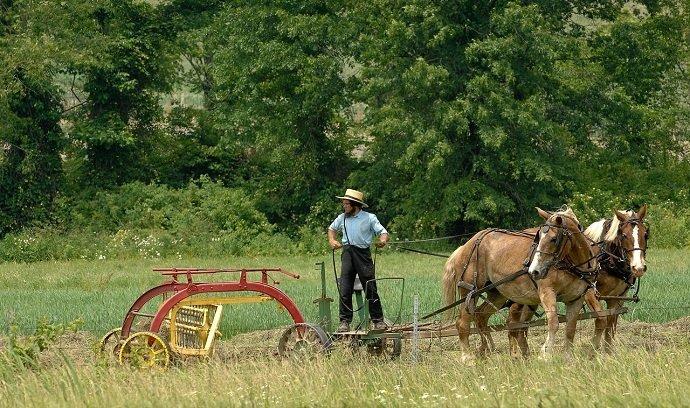 Image Attribution: Amish Farmer Raking Hay: Joe Schneid BY CC 3.0