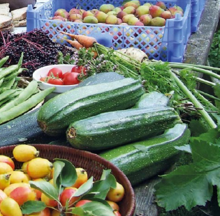 Despite being only one fifth of an acre (0.08 hectares), the forest garden produces over a tonne of food annually.