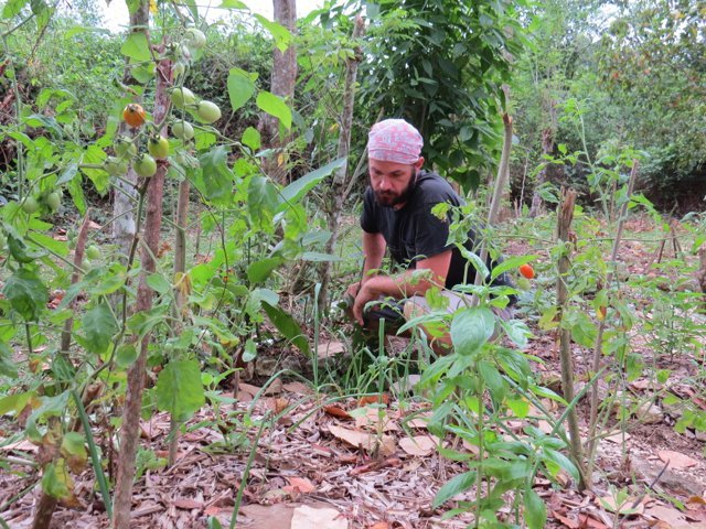 Guilds for the small scale home garden the permaculture for Small permaculture garden designs