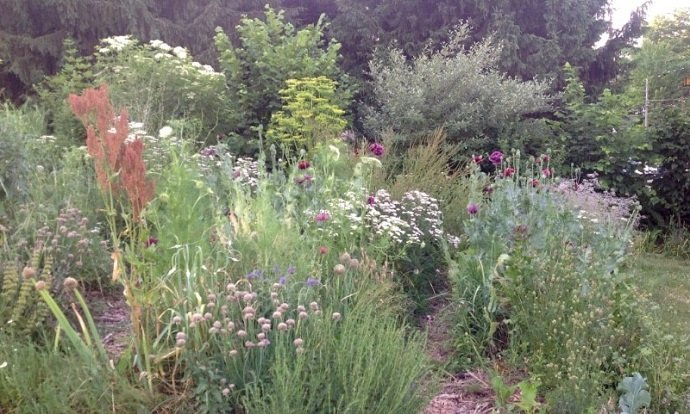 Urban Permaculture Transformation in Michigan 08