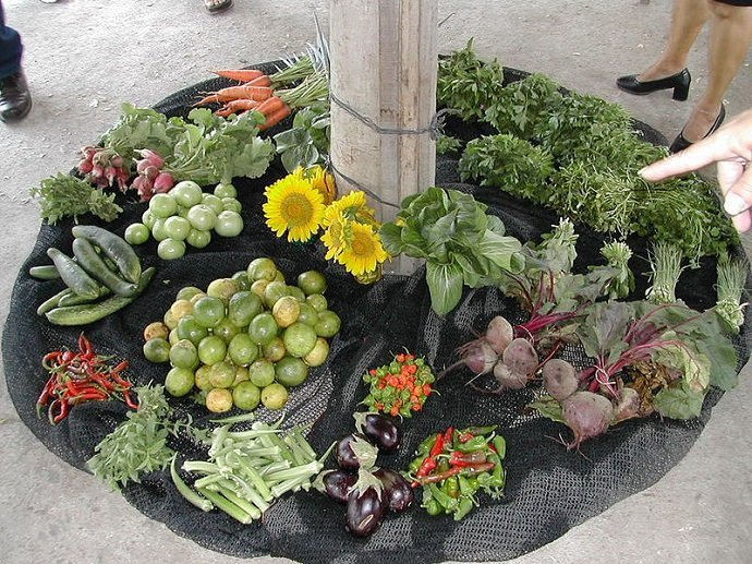 Produce and flowers from a Cuban organopónico. Via Wiki.