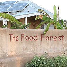 The Food Forest: A Shining Example Of Permaculture in Australia