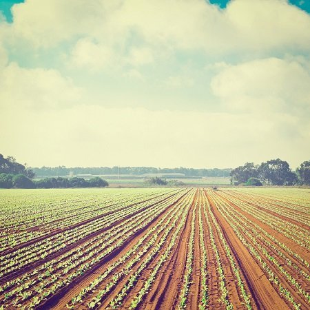 Comparative look at Organic and Conventional Farming - The ...
