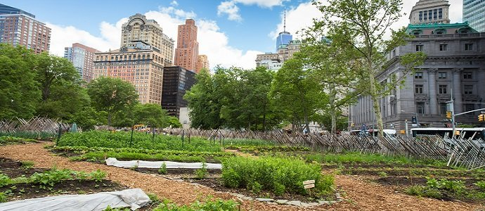 NYC Urban Farm