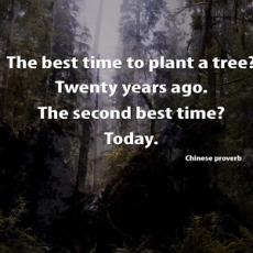 One Man's Mission to Revive the Last Redwood Forests feat