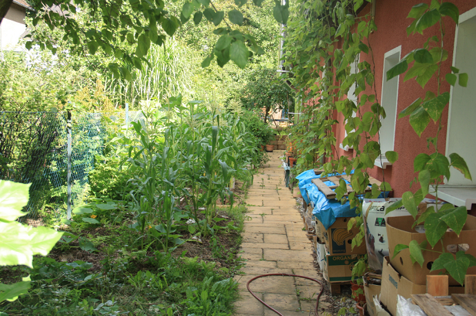 Urban Permaculture Transformation 32