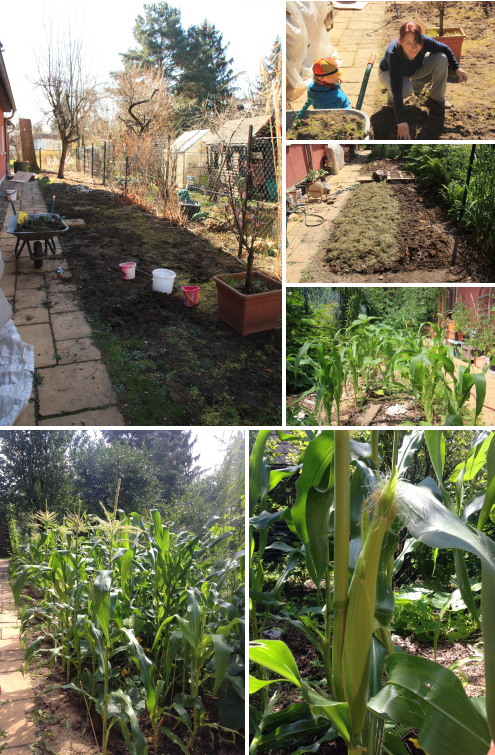 Urban Permaculture Transformation 33