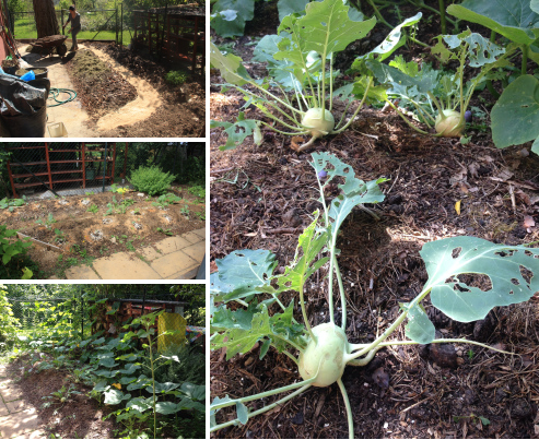 Urban Permaculture Transformation 34