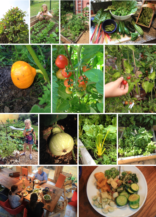 Urban Permaculture Transformation 41