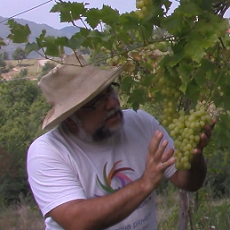 The Environmental Impact of Soil Erosion on a Permaculture Vineyard in Piedmont, Italy.