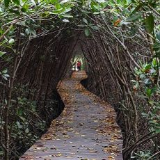 Wooden bridge through the mangrove reforestation in Petchaburi