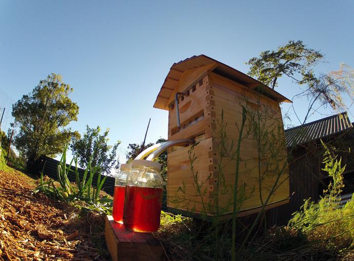 Flow Hive Update 01