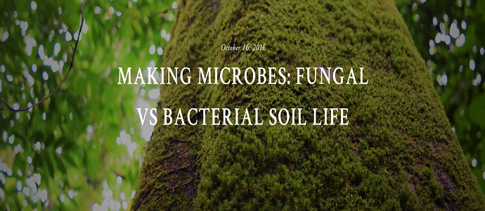 Making microbes fungal vs bacterial soil life the for Mineral soil vs organic soil