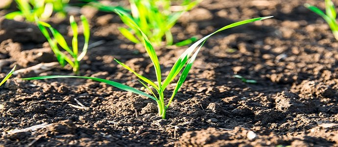 Photo of How To Know When Your Soil Needs Nitrogen