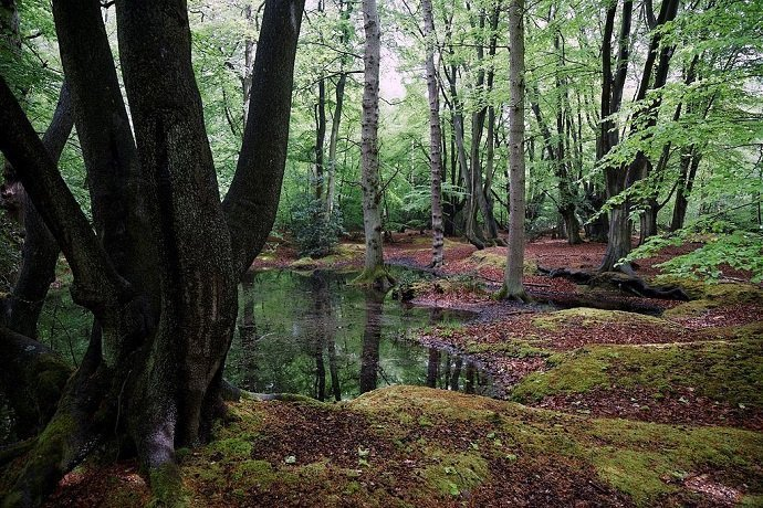Pond in Forest under Trees: Aca Bashi: CC 4.0