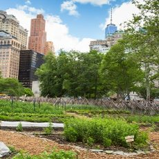 NYC Urban Farm 01