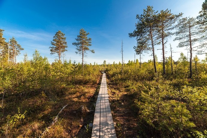 Wooden path on bog land in Estonia