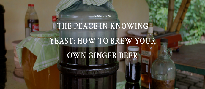 Photo of The Peace in Knowing Yeast: How to Brew Your Own Ginger Beer