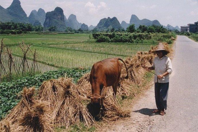 China Rice Field with Farmer: Markus Raab: CC 2.5