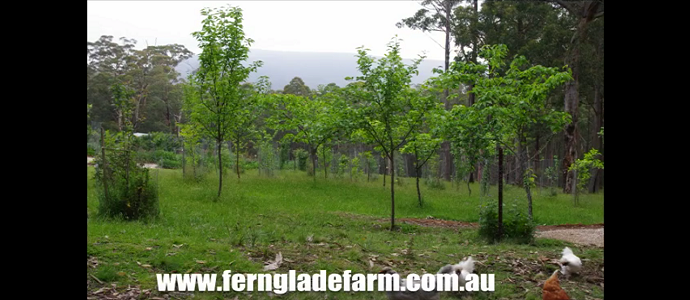 Photo of 500 days In A Food Forest To Now Include 1100 days!