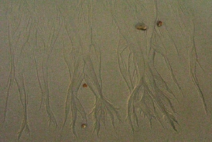 Dendritic Sand (Courtesy of Dave Bonta)