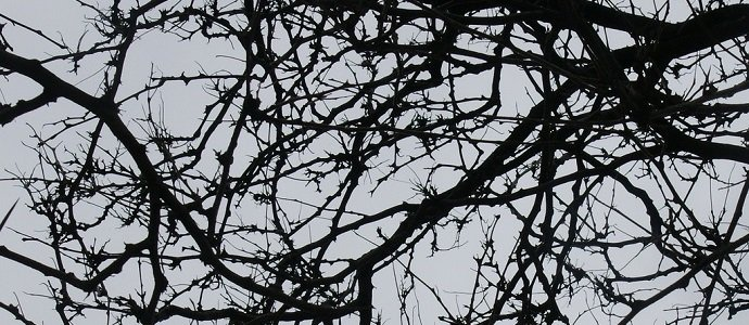 Dendritic Tree (romana klee)