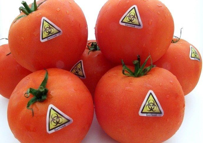 GMO 02