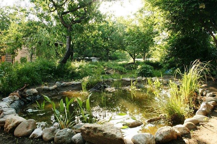 The wildlife pond, aka 'the mulch machine'