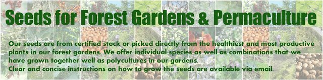 Seeds for Forest Gardens and Permaculture