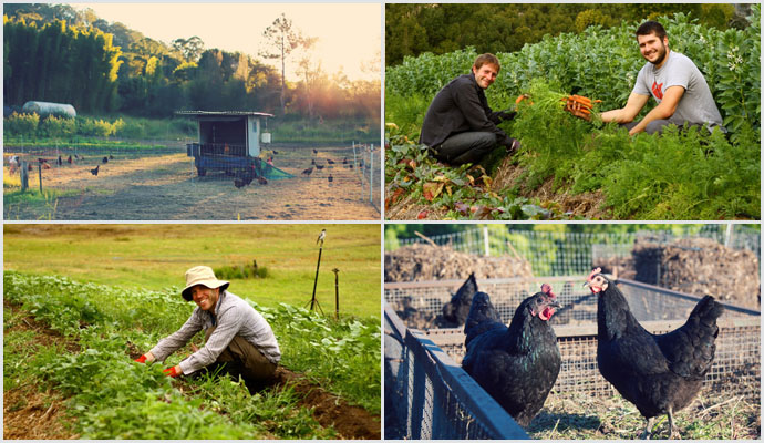Permaculture-action-crops