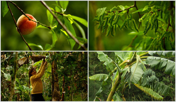 Permaculture-action-food-forest