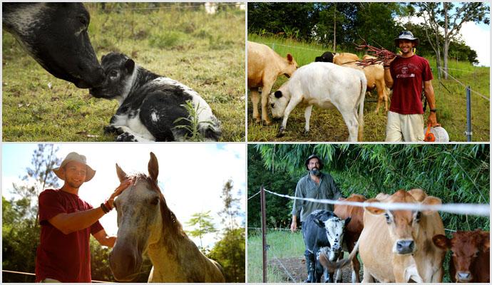 Permaculture-action-large-animals